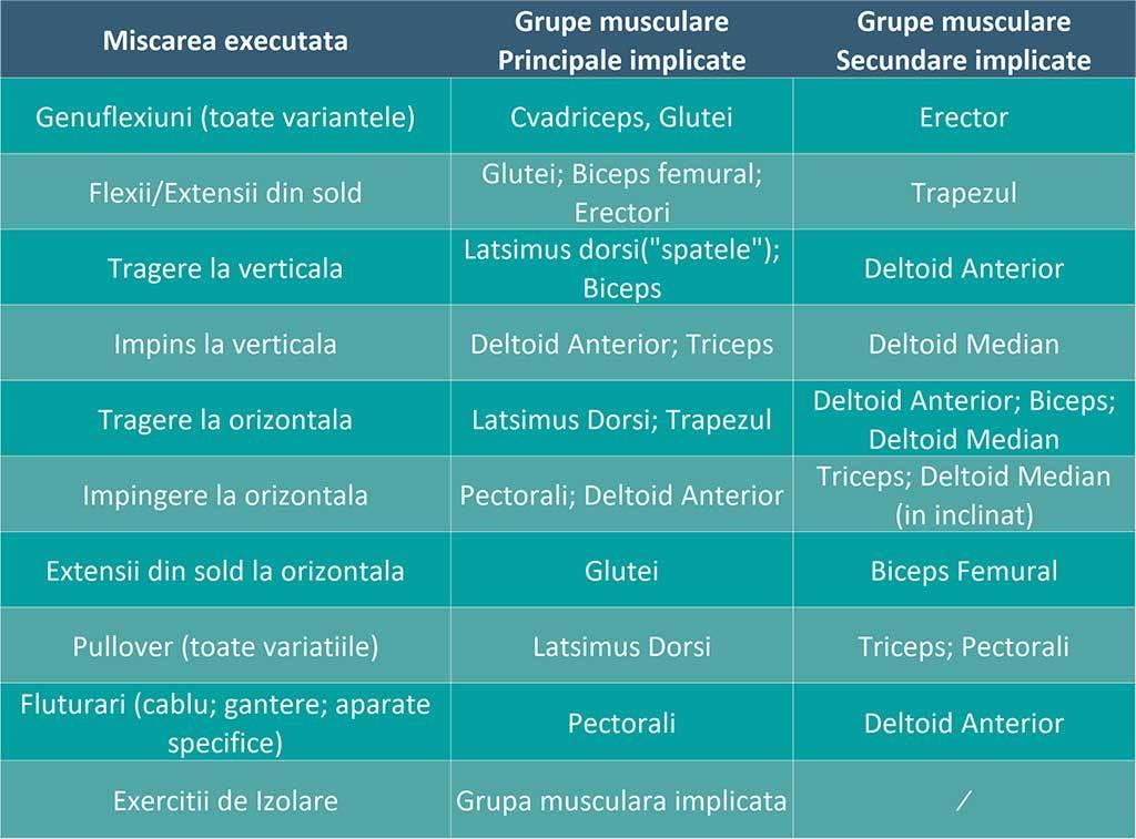 tabel al tuturor miscarilor pe care le executam in sala de antrenamente, plus grupele principale si secundare implicate