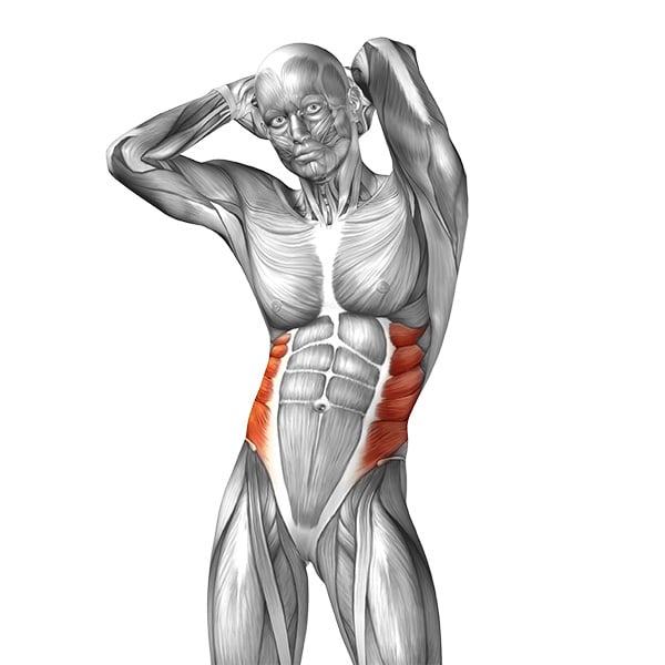 Grafica pe corpul uman a muschilor oblici