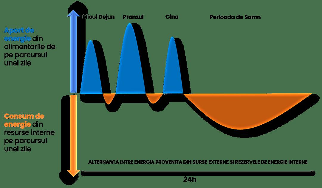 Reprezentare grafica a alternantei zilnice intre deficitul caloric din organism si surplusul caloric